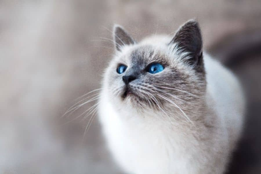 Does My Senior Cat Need Pet Insurance?