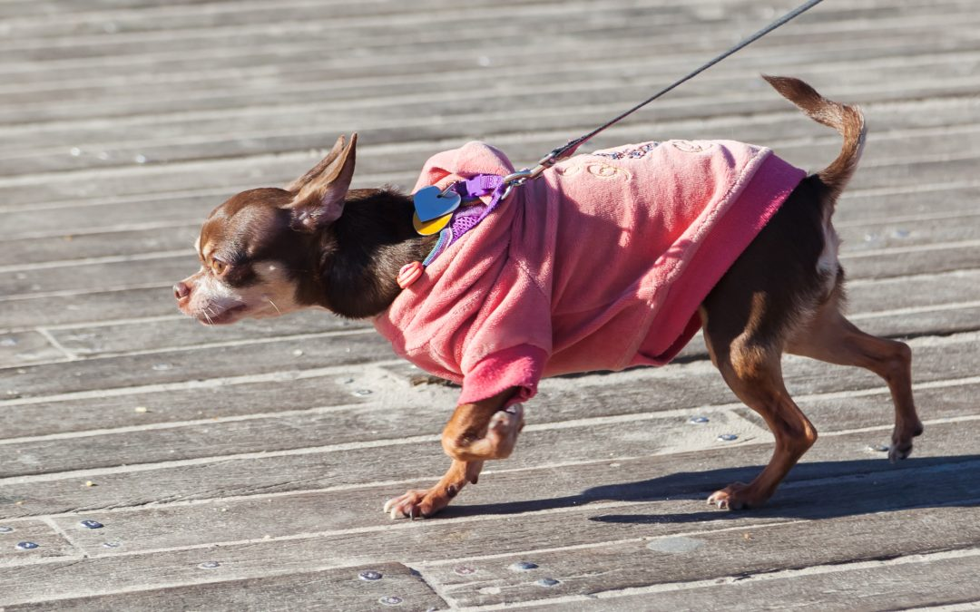 Should You Put Your Dog in a Sweater