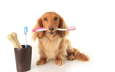 Caring For Your Dog After Tooth Extraction