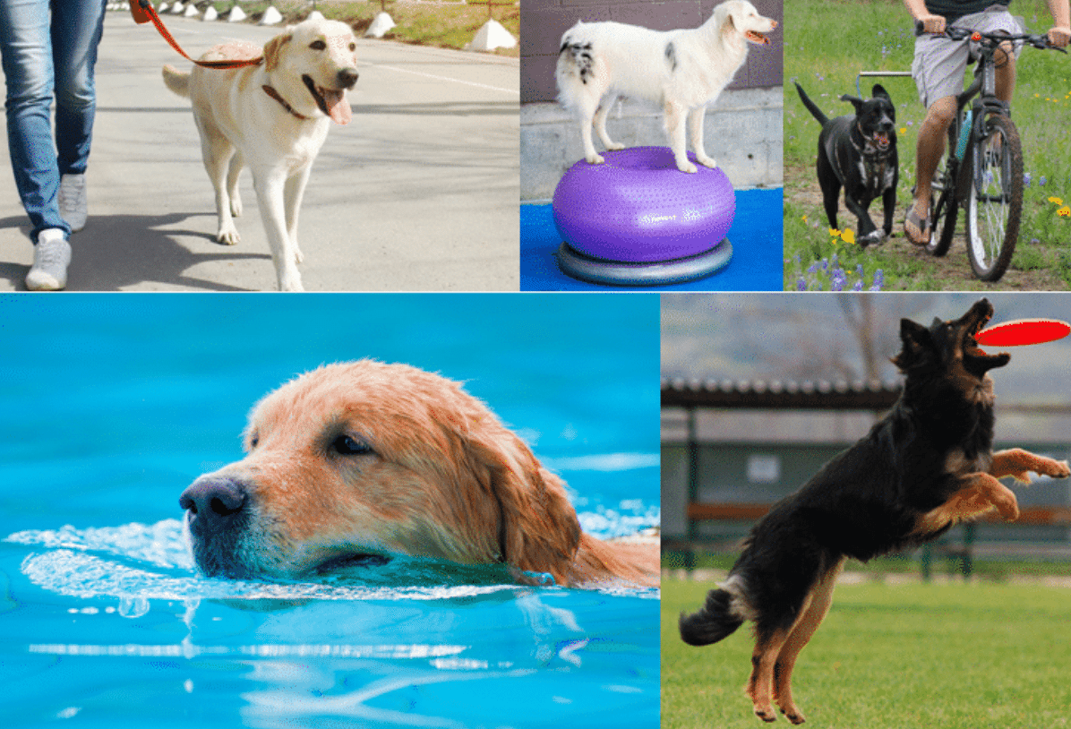 Exercise your dog the right way