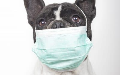How to Keep Your Pet Healthy and Happy During the Quarantine