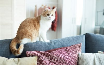 The Importance of Everyday Cat Sitting Visits