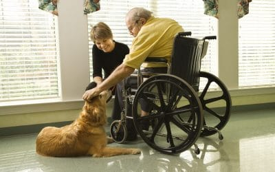 3 Ways to Participate in Canine Therapy