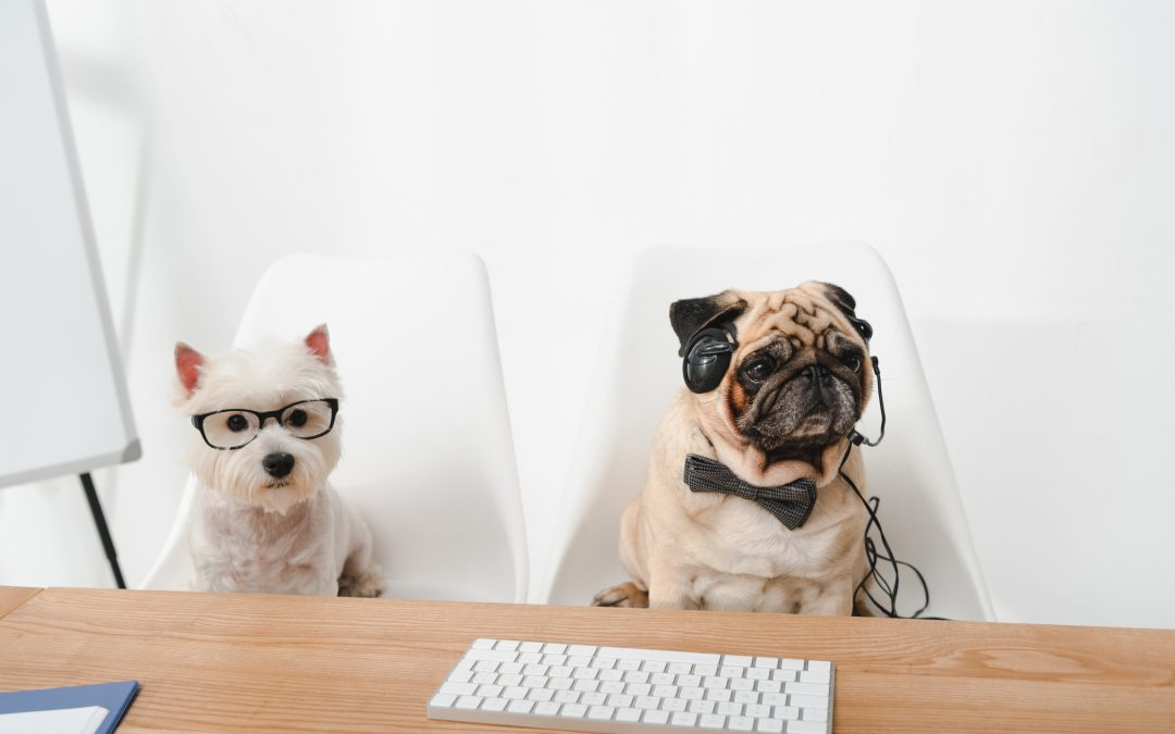 What Positive Influence Pets Can Bring In the Workplace?
